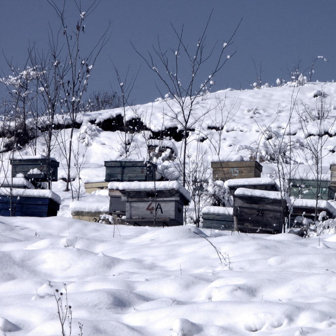 ruche-hiver